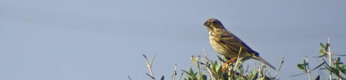 La Janda Bird Calendar
