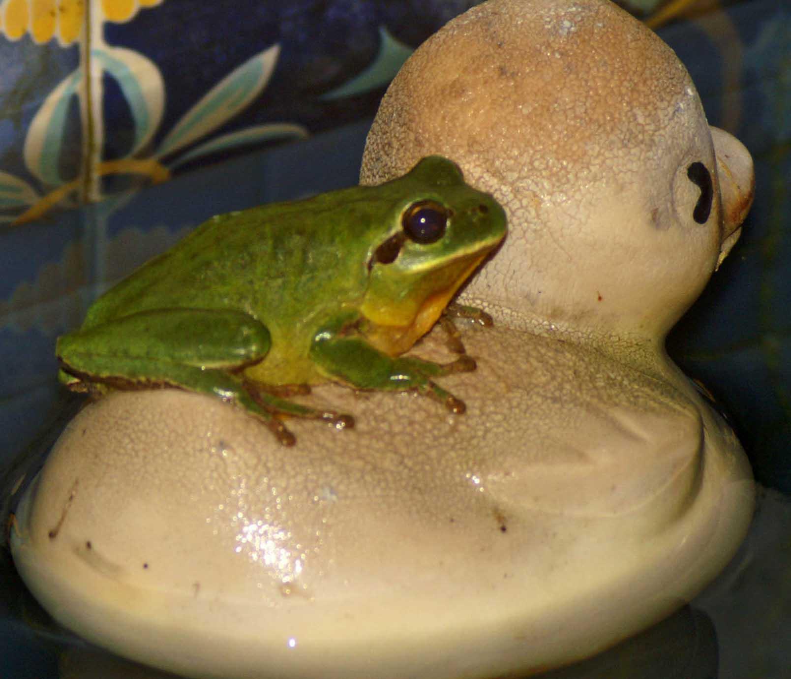 Tree frog | nightingale trails