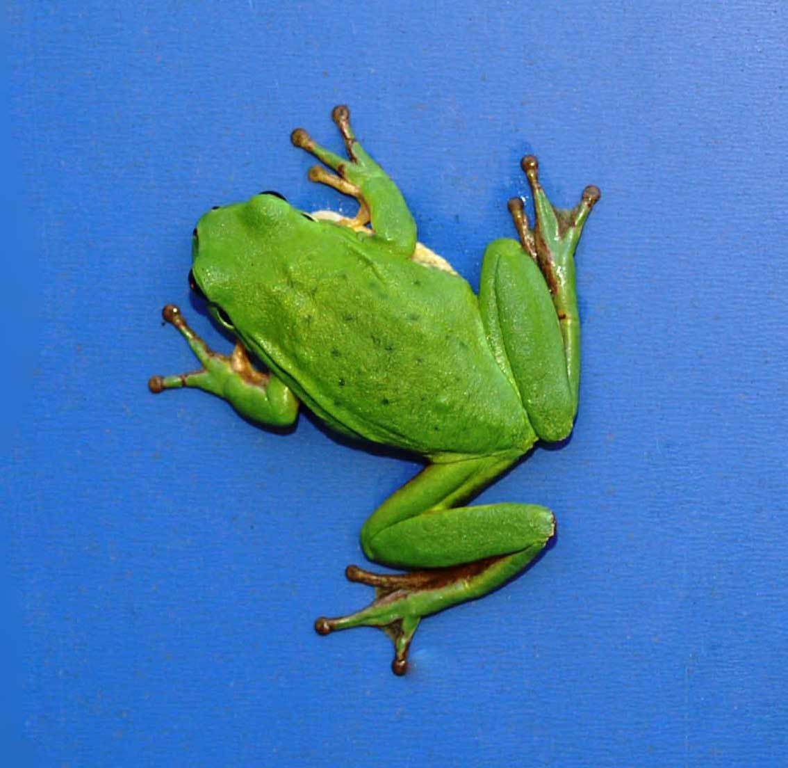 the frog and the nightingale Cbse class 10 poem the frog and the nightingle part 1 in hindi.