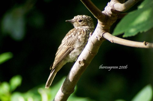 A closer look at one of the young birds