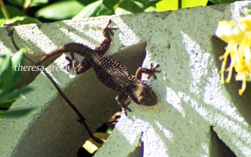 The gecko set off back down the wall