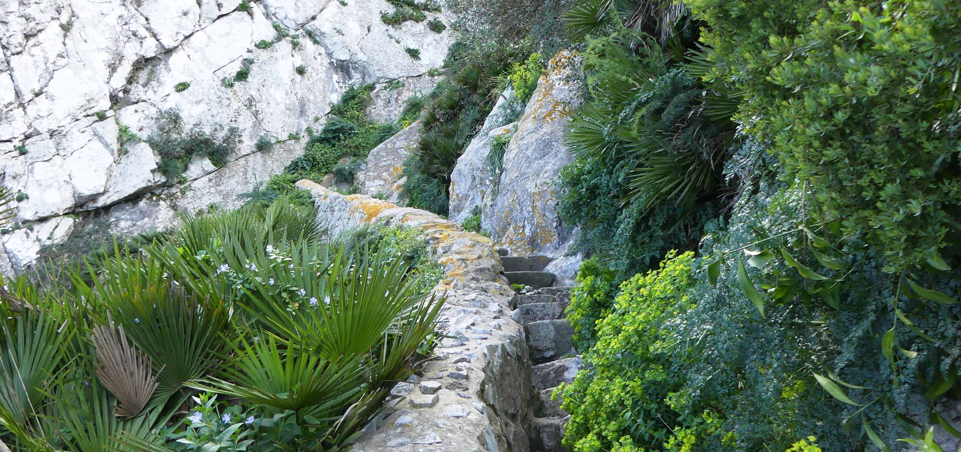 The Mediterranean Steps in Spring
