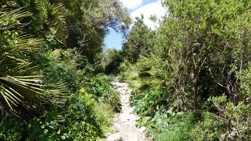 170322-GIBMS115-1422-Path