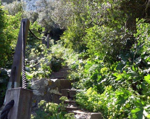 170322-GIBMS115-1434-More steps