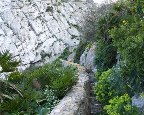 170322-GIBMS115-1444-More steep steps