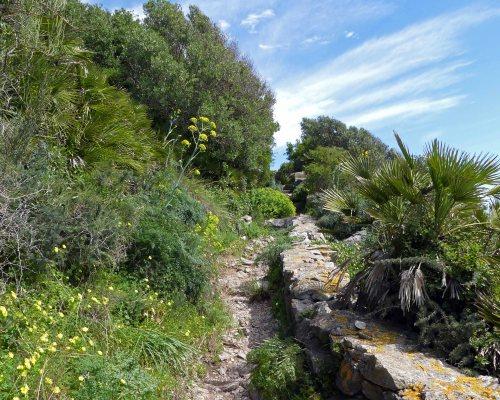 170322-GIBMS31-1201-Med Steps cliff path