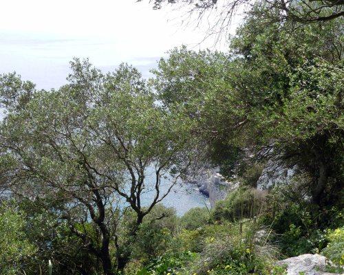 170322-GIBMS91-1347-Wild Olives